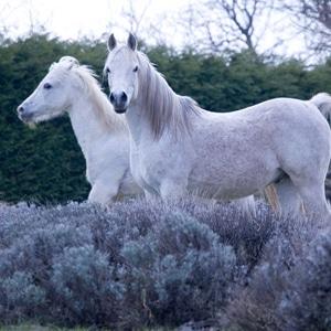 Pferde-neu